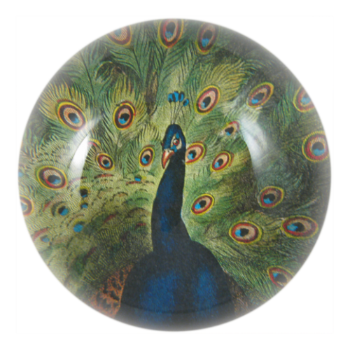 John Derian - Peacock Close-up Dome Paperweight