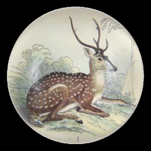 John Derian - Sitting Deer Dome Paperweight